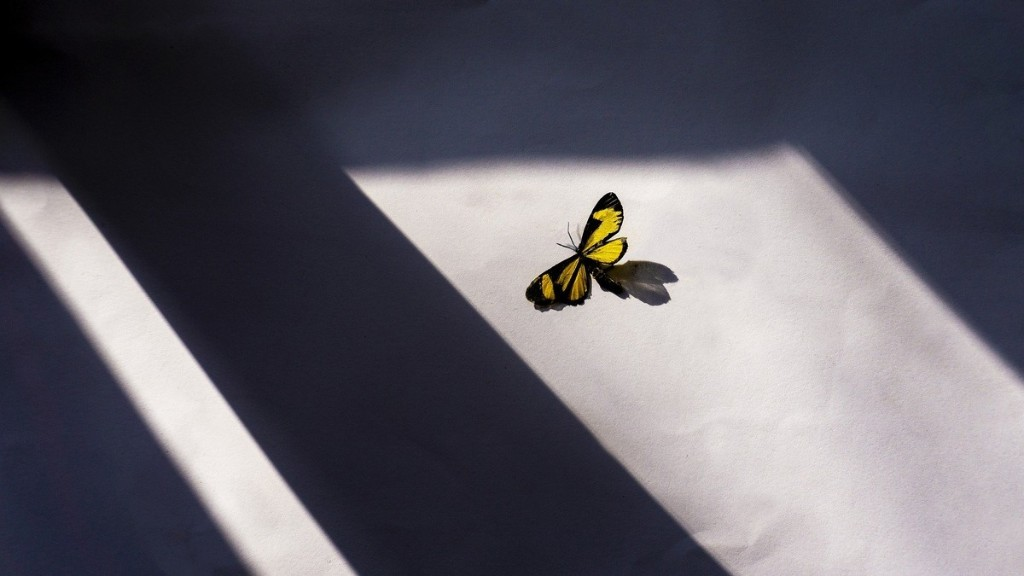 Scientists Have Shown There's No 'Butterfly Effect' in the Quantum World