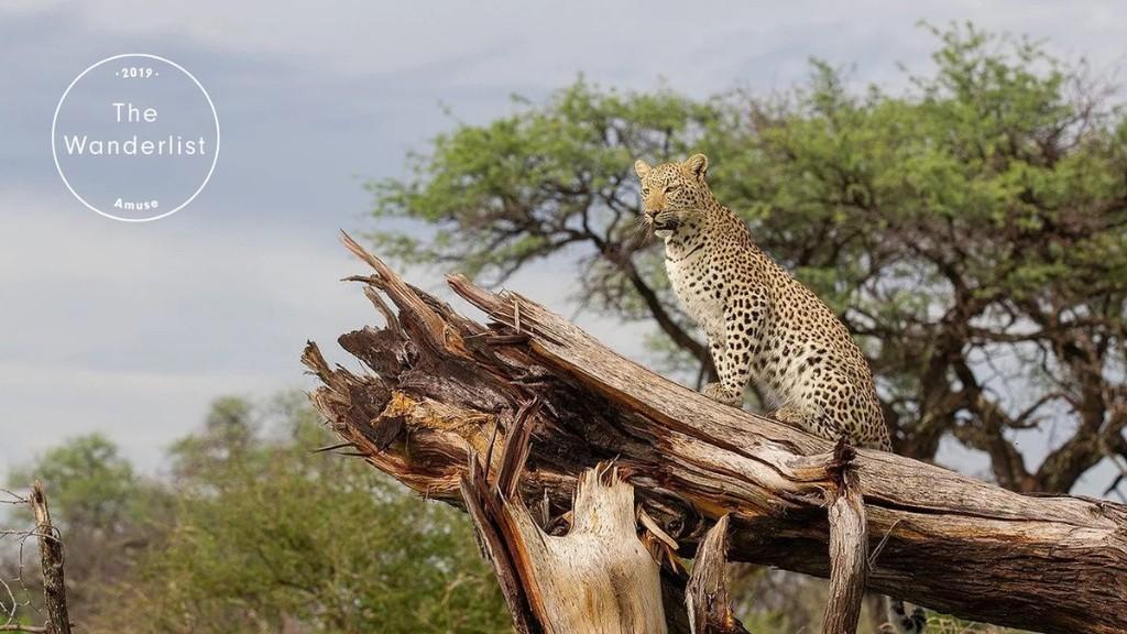 Try a Vegan Safari in Botswana, Africa's Anti-Hunting Heartland   The Wanderlist 2019