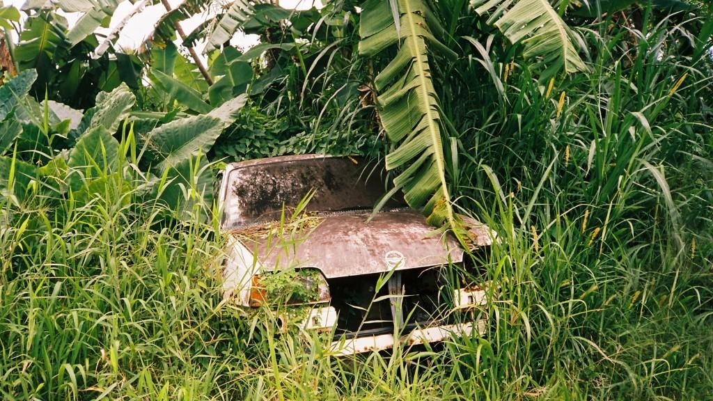 La Martinique est un petit bout de paradis