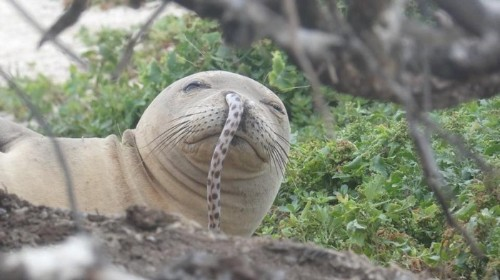 Everything You Wanted to Know About This Monk Seal With an Eel in Its Nose