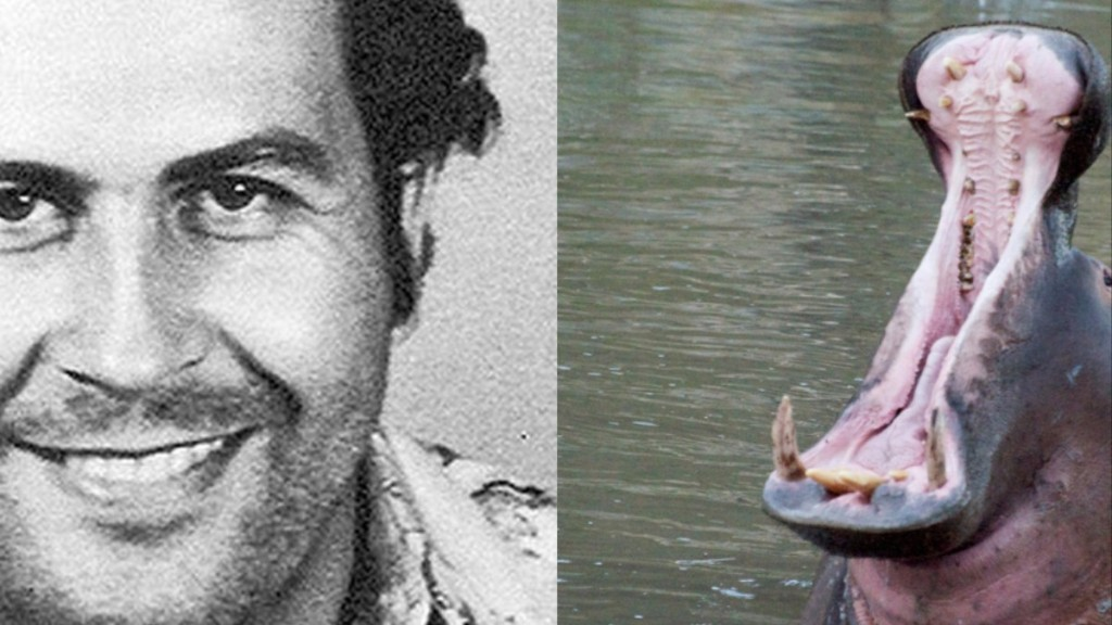 Pablo Escobar's Hippos Keep Having Sex and No One Is Sure How to Stop Them