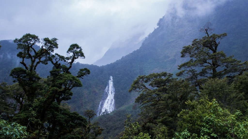 Antarctica Was a Lush Rainforest 90M Years Ago, Scientists Discover