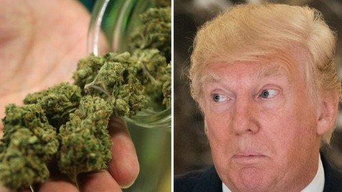 The Trump Administration Has Secretly Launched an Anti-Weed Committee