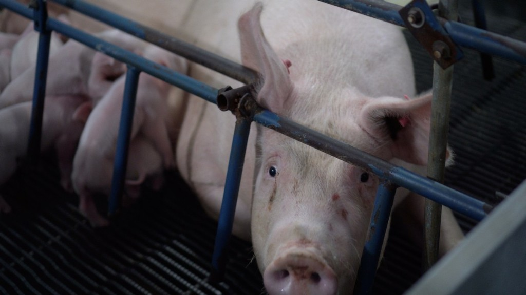 The Next Pandemic Could Come From an American Factory Farm