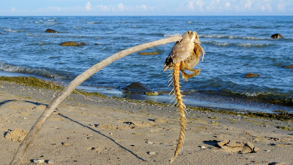 The Last Time Oceans Got This Acidic This Fast, 96% of Marine Life Went Extinct