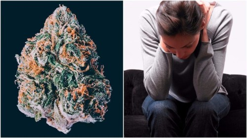 This Is Why Weed Makes Some People Anxious