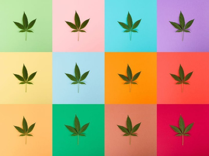 Le Guide VICE du Weed - cover