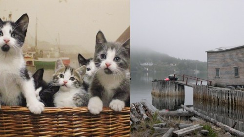 The Feral Cats of This Abandoned Island Off Newfoundland Are Getting Rescued