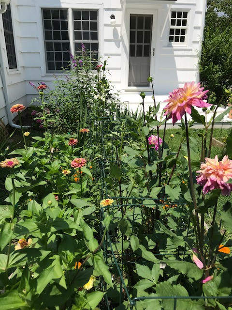 My Garden Has Always Gotten Me Through a Crisis. This Pandemic May Be Its Biggest Test