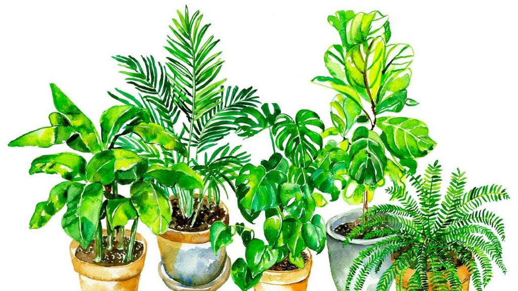 5 Chic Houseplants and How to (Finally) Keep Them Alive