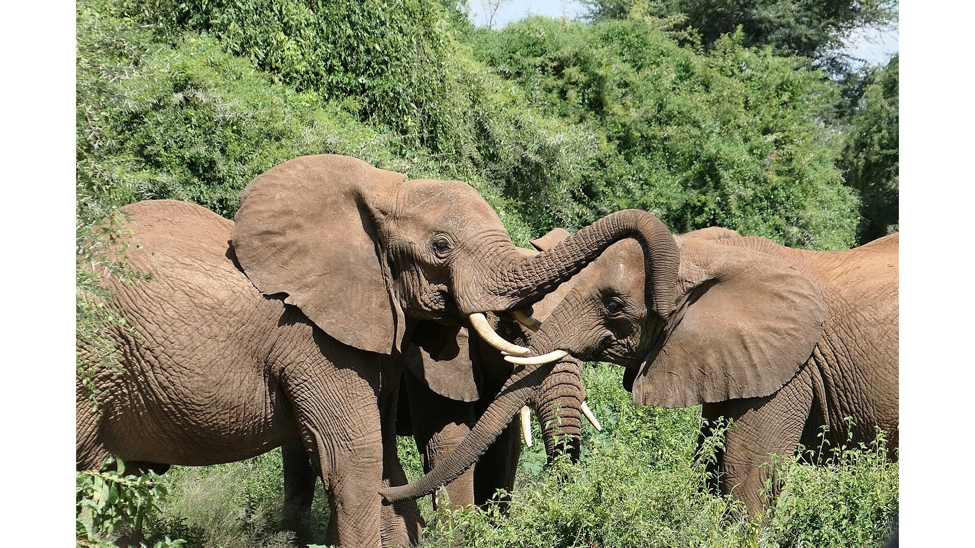 Who Will Save the Elephants?