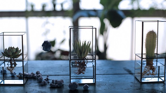 Sleek hydroponic terrariums are like picture frames for plants