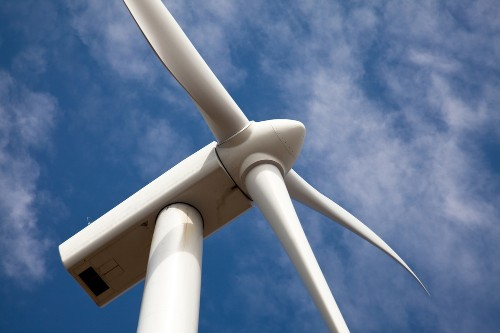 Updated US policy permits accidental bald eagle death via wind turbine