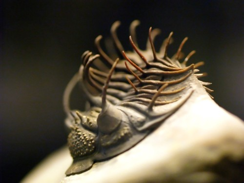 The Verge Review of Animals: trilobites