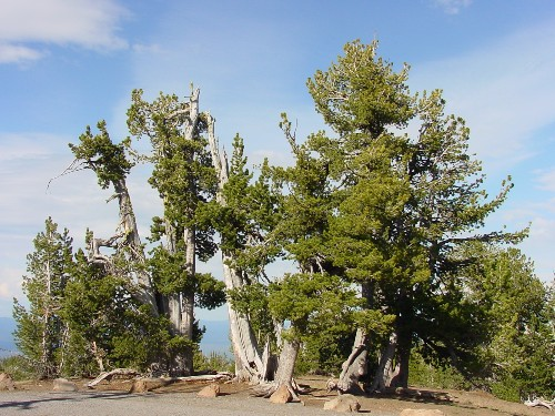 Uprooted: how climate change may kick off an artificial migration of trees