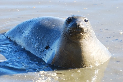 The Verge Review of Animals: the elephant seal