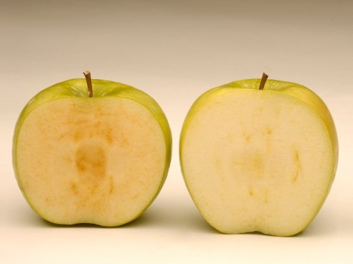 GMO apples that don't brown so quickly have been approved by the USDA