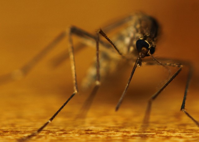 West Nile virus costs the US $56 million a year, says new report