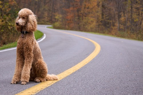 Google researchers reveal new Poodle bug, putting the web on alert