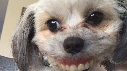 This Dog Stole Her Human's Dentures And I Am In Tears