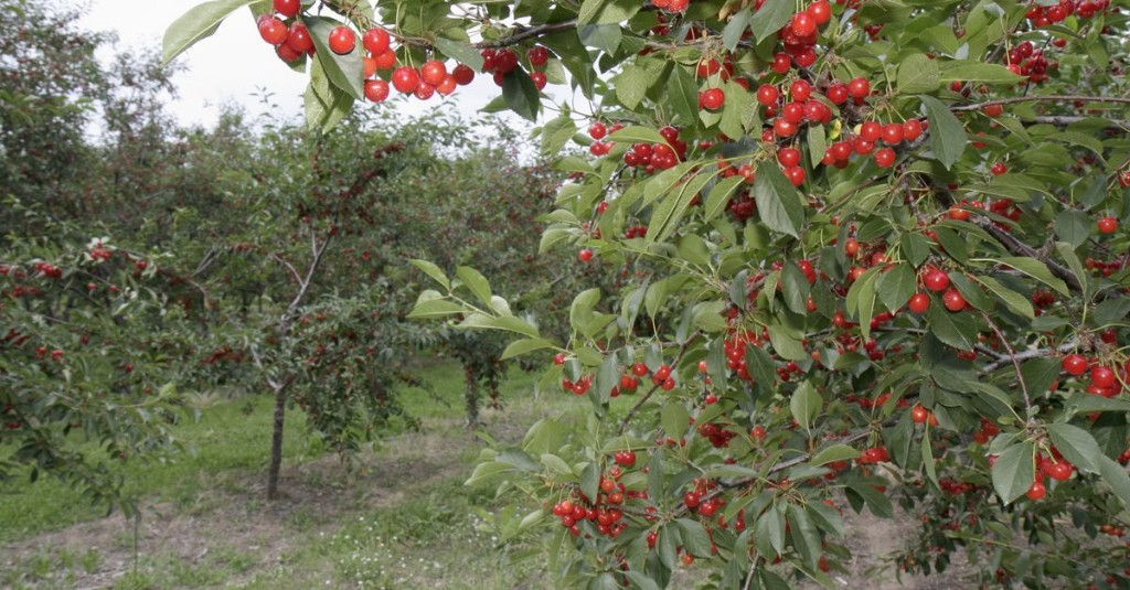 Farms and Orchards File Lawsuits Fighting Michigan's COVID-19 Executive Orders