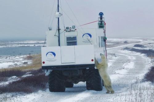 Google Street View captures Canada's polar bears in conservation effort