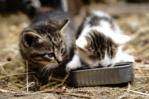 The environmental footprint of your pet is bigger than you think