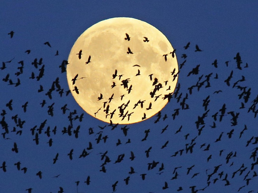 We're getting a full moon on Halloween — and this one is extremely rare