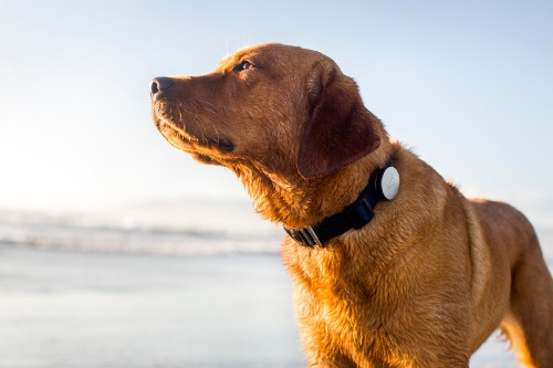 Whistle, a 'Fitbit for dogs,' acquires pet-tracking company Tagg