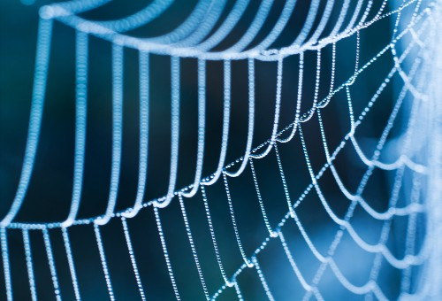 Cobweb-scanning software can identify spider species