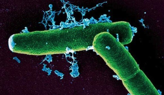 Your body contains 100 trillion bacteria, but that's a good thing