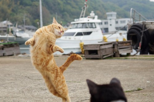 Witness cat ballet, the forbidden feline dance