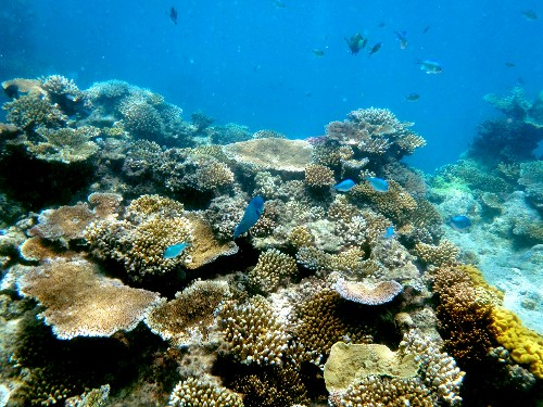 Humans are helping coral evolve to survive climate change