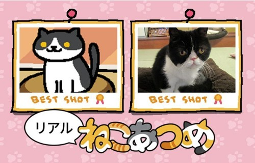 Watch a real-life YouTube version of cult cat app Neko Atsume tonight