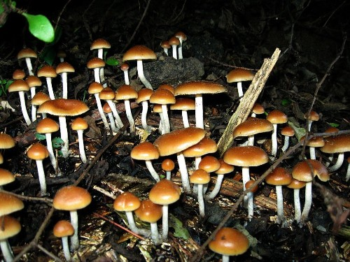 Scientists figured out how shrooms open your mind