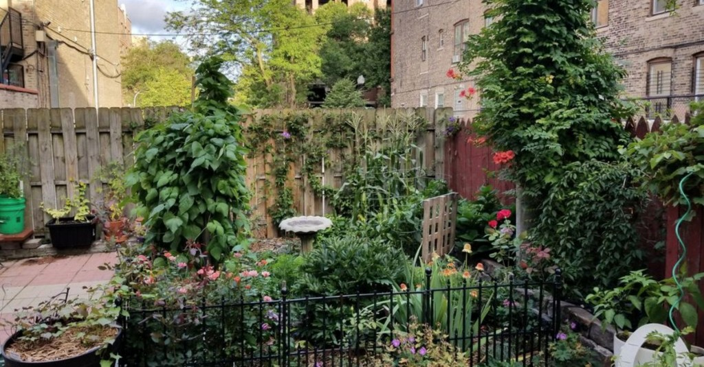Rent these 5 Chicago apartments with amazing backyards and gardens