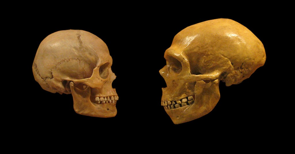 Sex, disease, and extinction: what ancient DNA tells us about humans and Neanderthals
