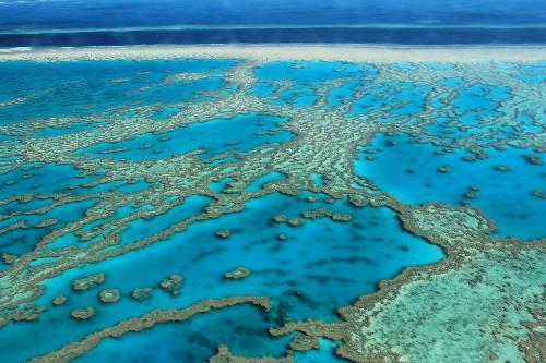 The Great Barrier Reef isn't dead (yet)