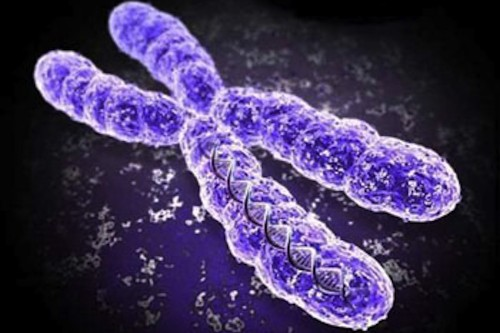 X doesn't mark the spot: real shape of chromosomes revealed