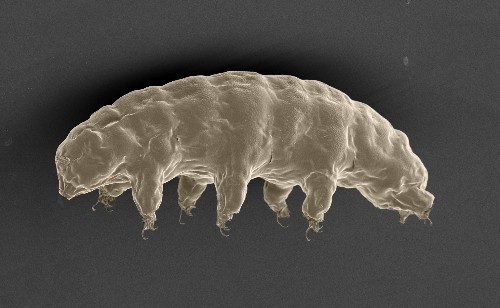 Tardigrades can live 30 years in a freezer and survive in space, and now we know why