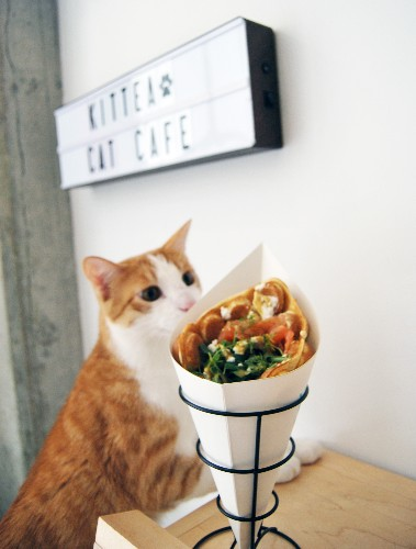 Cats And Bubble Waffles Are Best Friends Now at KitTea Cat Cafe