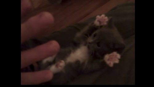 YouTube Decade makes me yearn for the simpler days of 'Surprised Kitty'