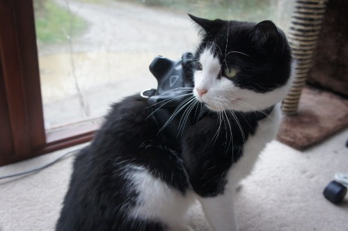 Someone strapped a VR tracker to a cat to play video games with it