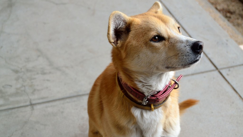 Why scientists believe dogs are smarter than we give them credit for