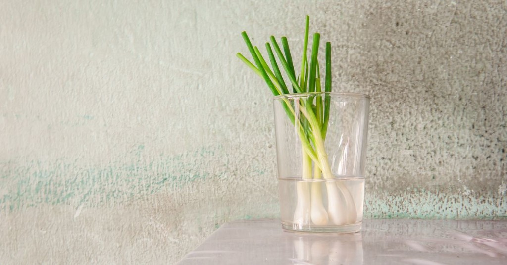 In Quarantine, the Budding of a Pastime: Growing Vegetable Scraps on Windowsills