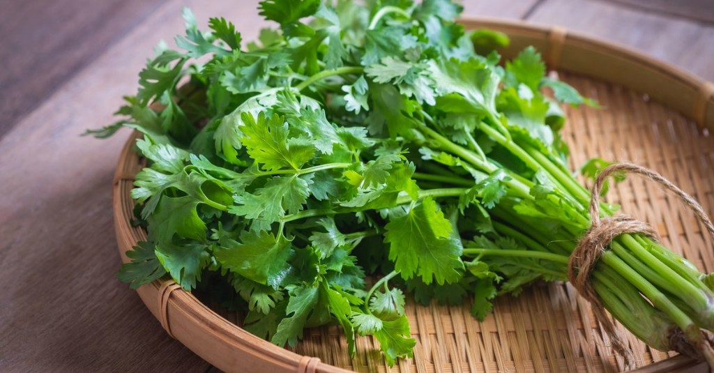 Coriander and cilantro pack plenty of flavor and a hearty nutrient punch