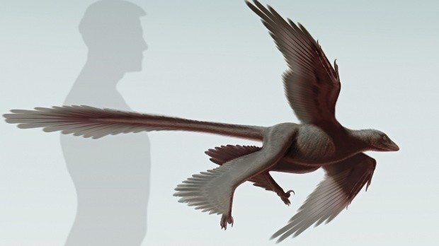 Largest four-winged dinosaur discovered in China