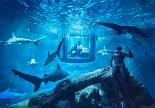 Airbnb will let two people sleep in an underwater bedroom surrounded by 35 sharks