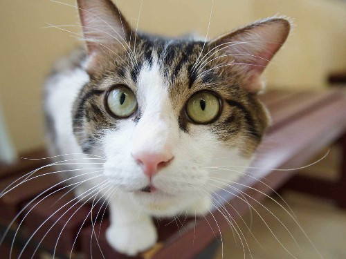 Rhode Island's Very First Cat Cafe Will Open in 2016