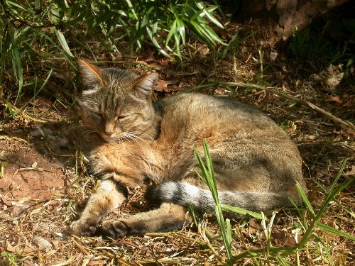 5,000-year-old cat fossils discovered in China help explain domestication